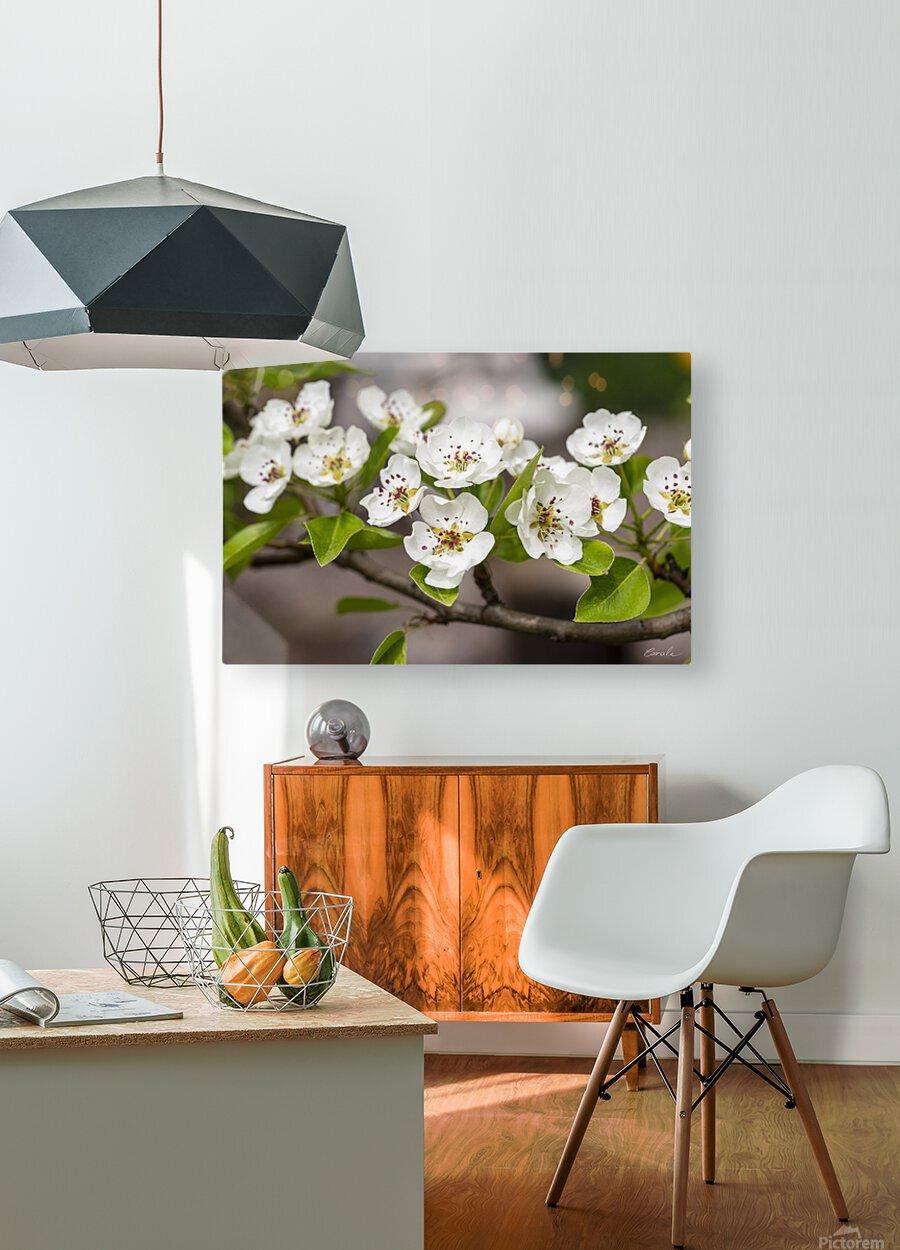 Poirier en fleurs 2  HD Metal print with Floating Frame on Back