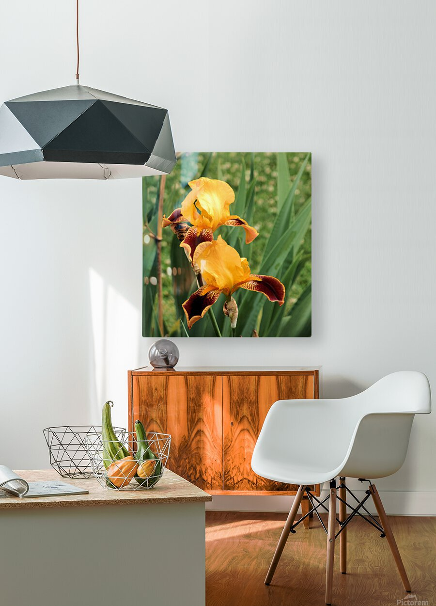 Yellow Brown Iris  HD Metal print with Floating Frame on Back