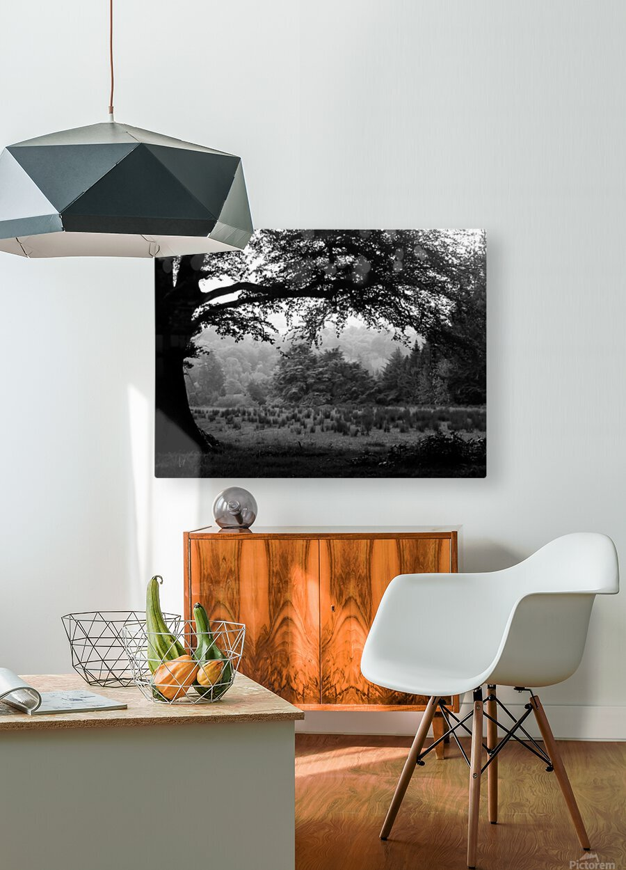 Black and White Field  HD Metal print with Floating Frame on Back