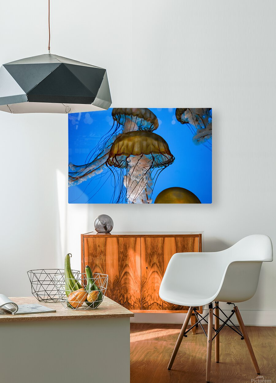 Orange Glow  HD Metal print with Floating Frame on Back