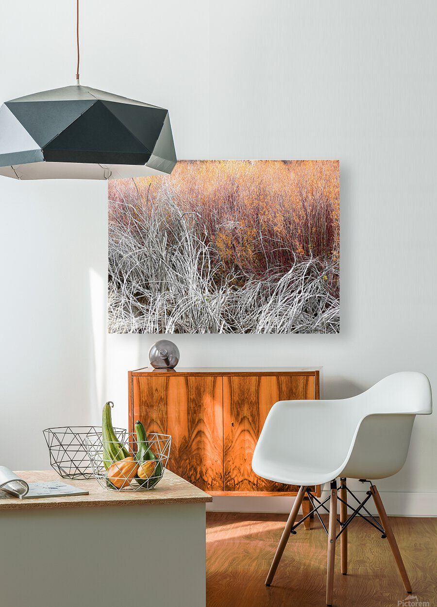 Willows  HD Metal print with Floating Frame on Back