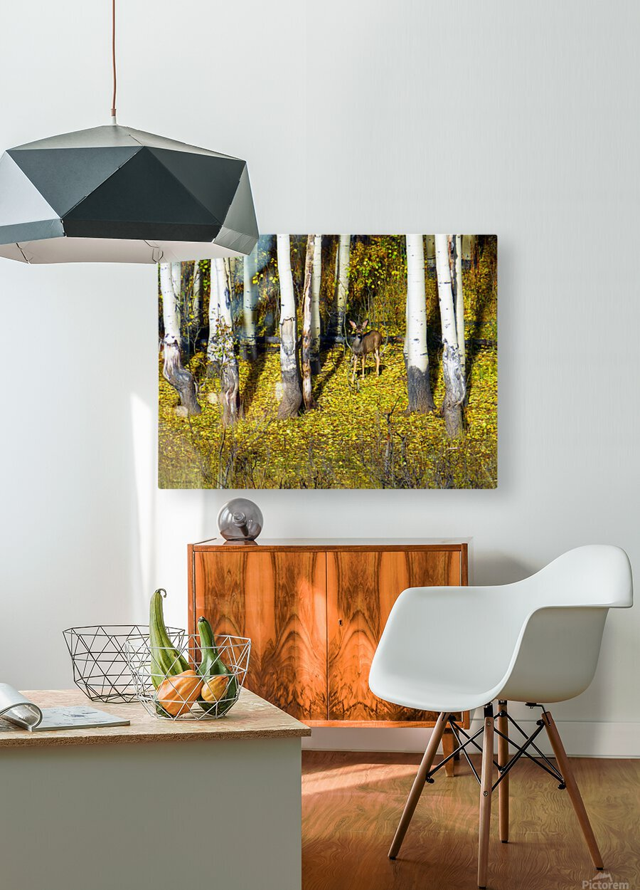 Baby Deer in Old Aspen Trees  HD Metal print with Floating Frame on Back
