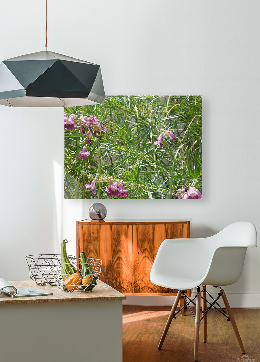 hummingbirdindesertwillow lrg  HD Metal print with Floating Frame on Back