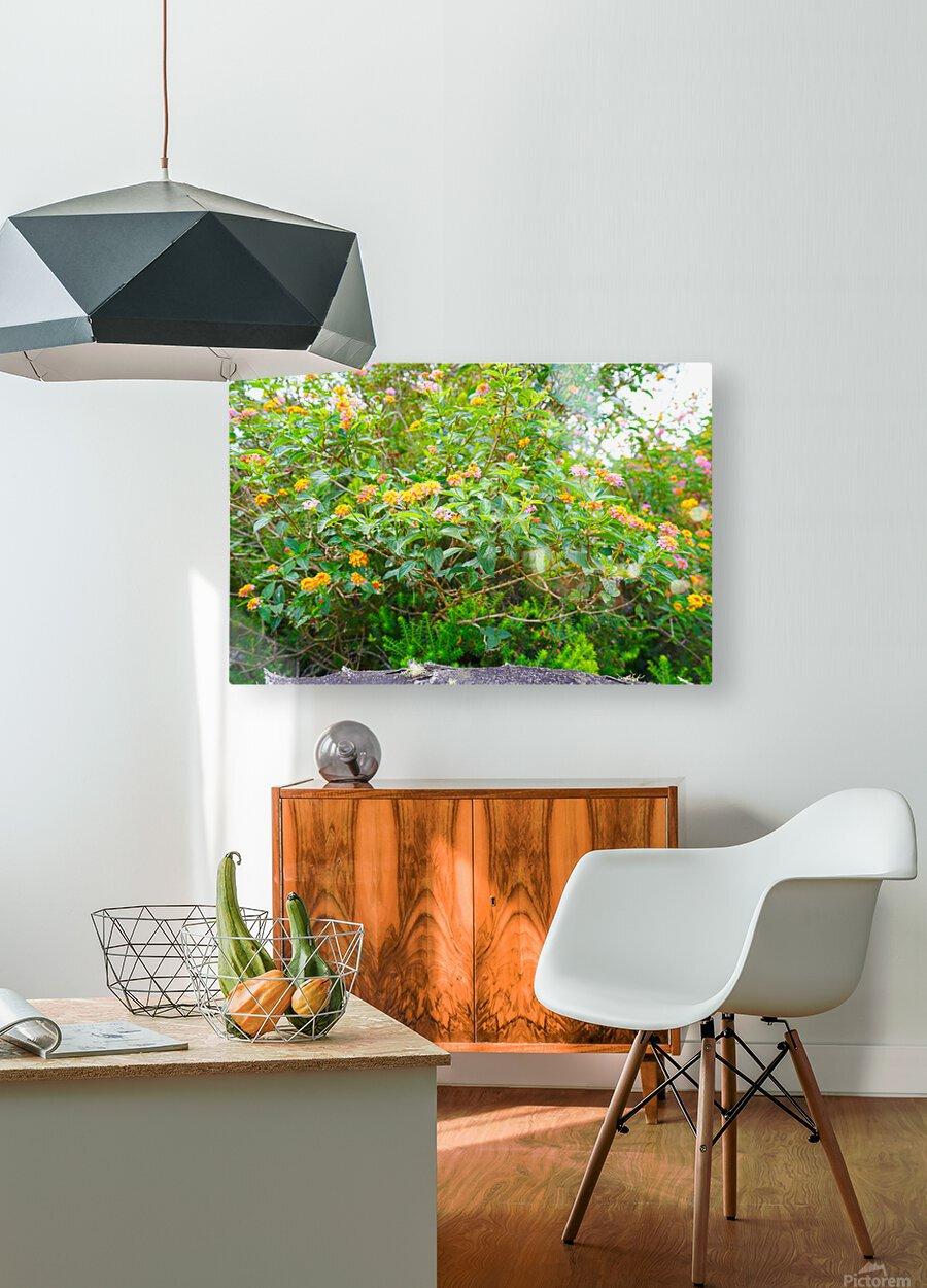 Wild Flowers Waimea Canyon Kauai  HD Metal print with Floating Frame on Back