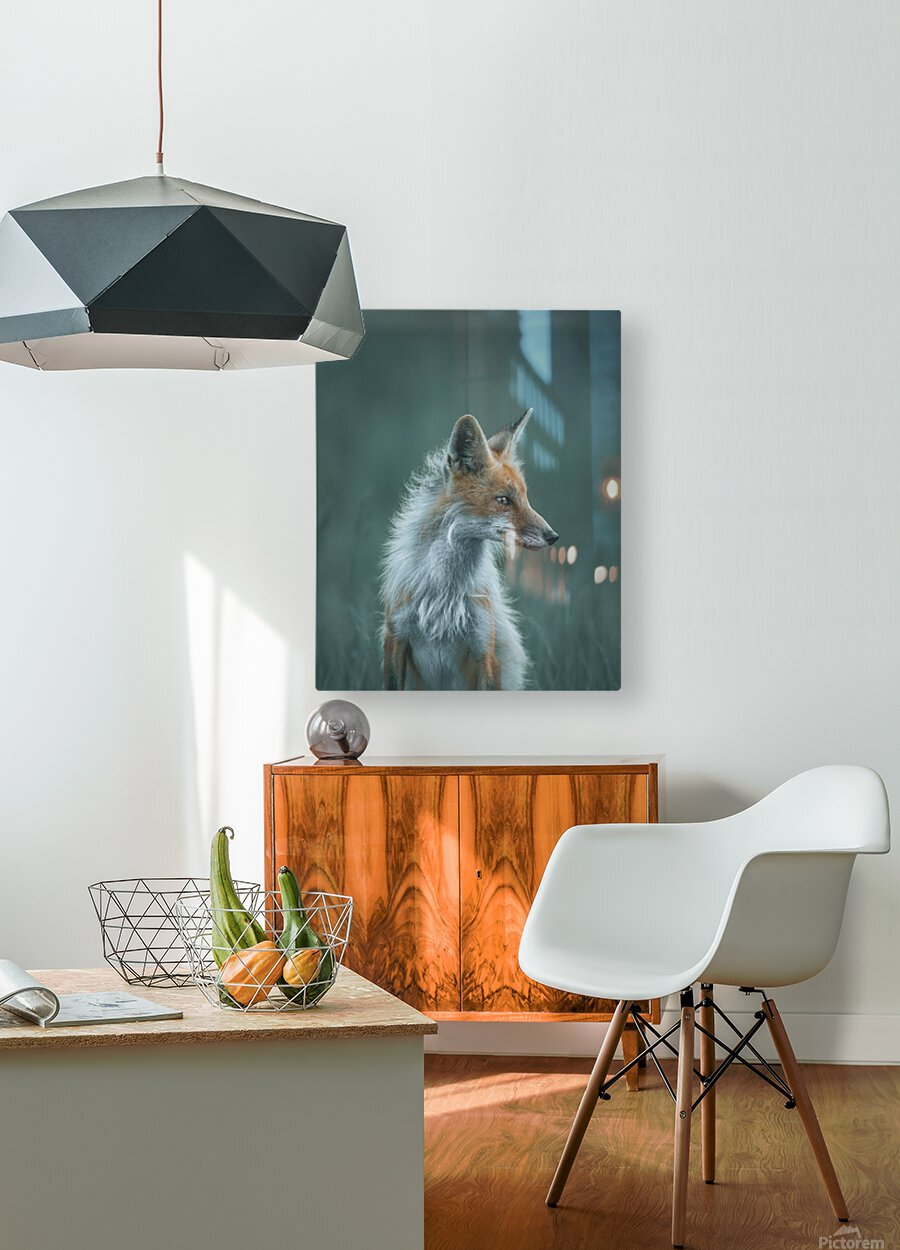 Red Fox   HD Metal print with Floating Frame on Back