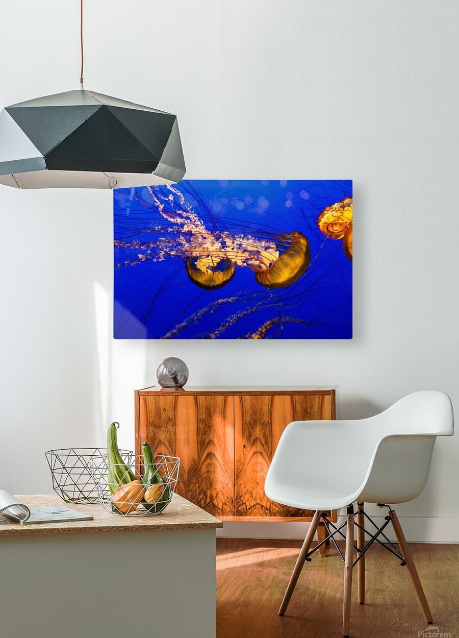 Monterey Jellyfish  HD Metal print with Floating Frame on Back
