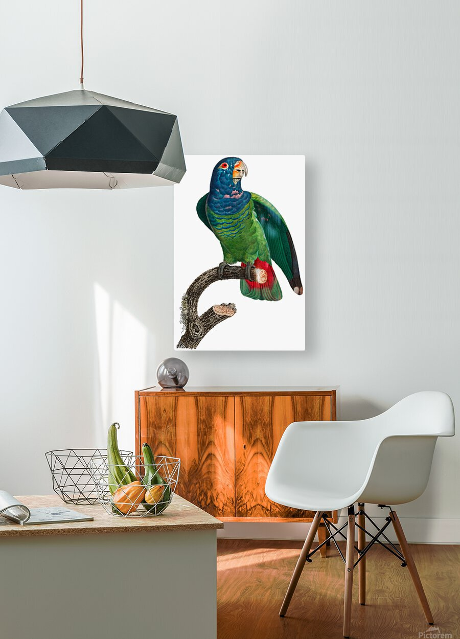 Parrot Print Antique Space Painting Vintage Drawing Poster Wall Art vintage animal parrot photo Tropical Parrot Art   HD Metal print with Floating Frame on Back