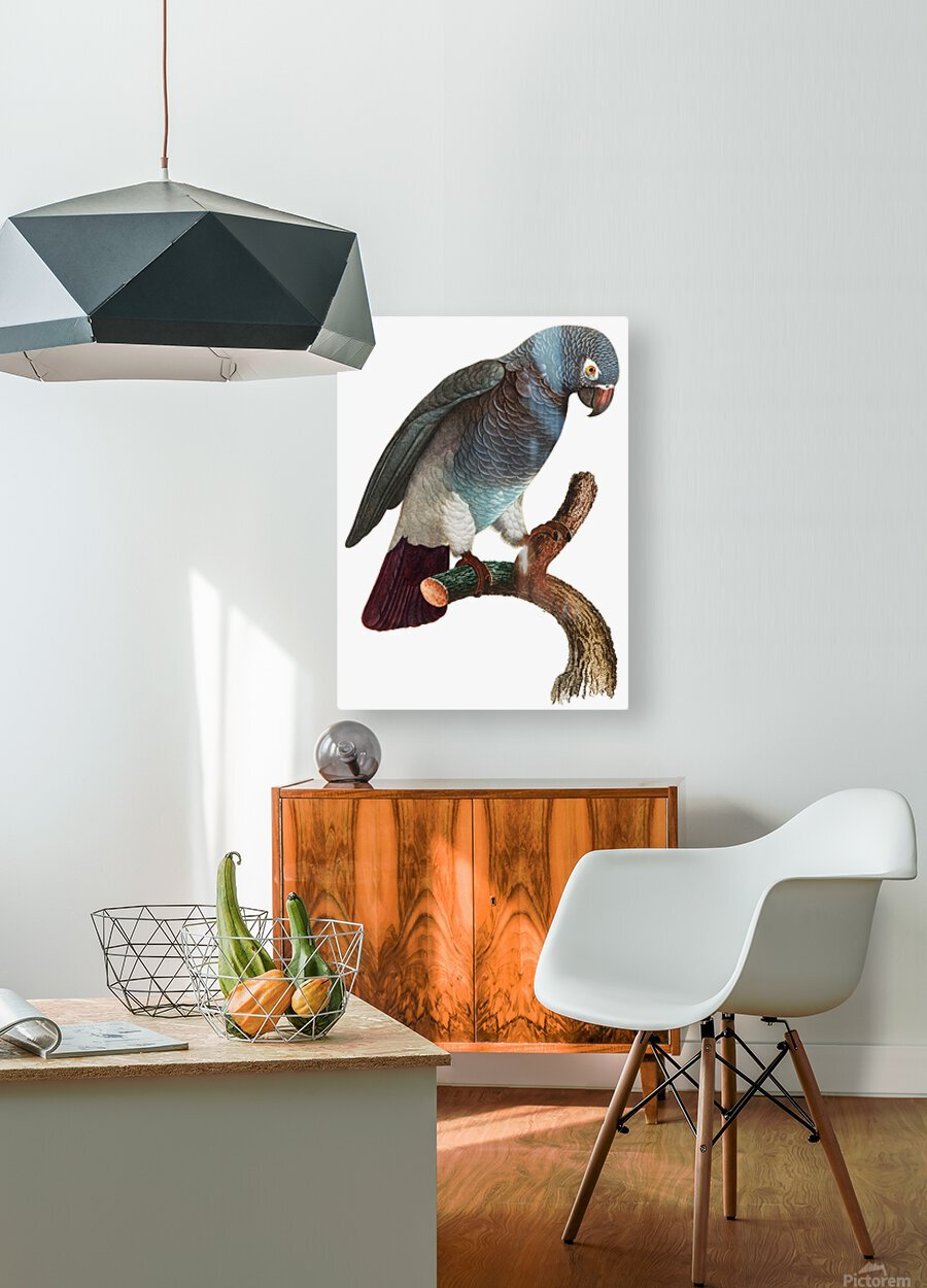 Macaw - Birds - Paradise - Tropical- Art Print - Wall Art - Parrot  HD Metal print with Floating Frame on Back