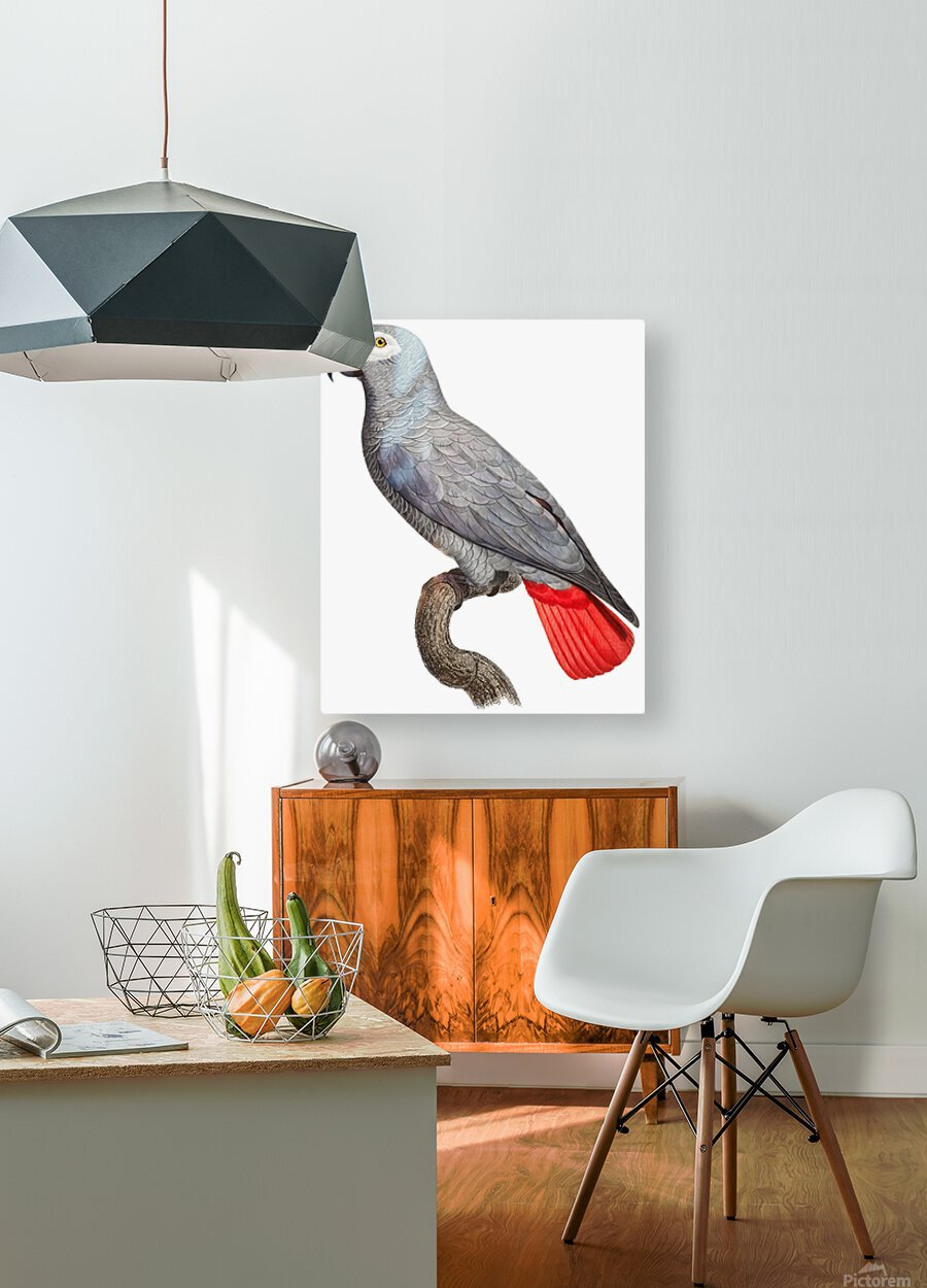 Parrot Print Art Poster with Parrot Parrot Wall Art for Bird Lovers  HD Metal print with Floating Frame on Back