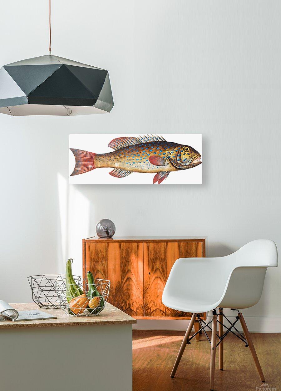 Vintage Fish Wall Art Prints   HD Metal print with Floating Frame on Back
