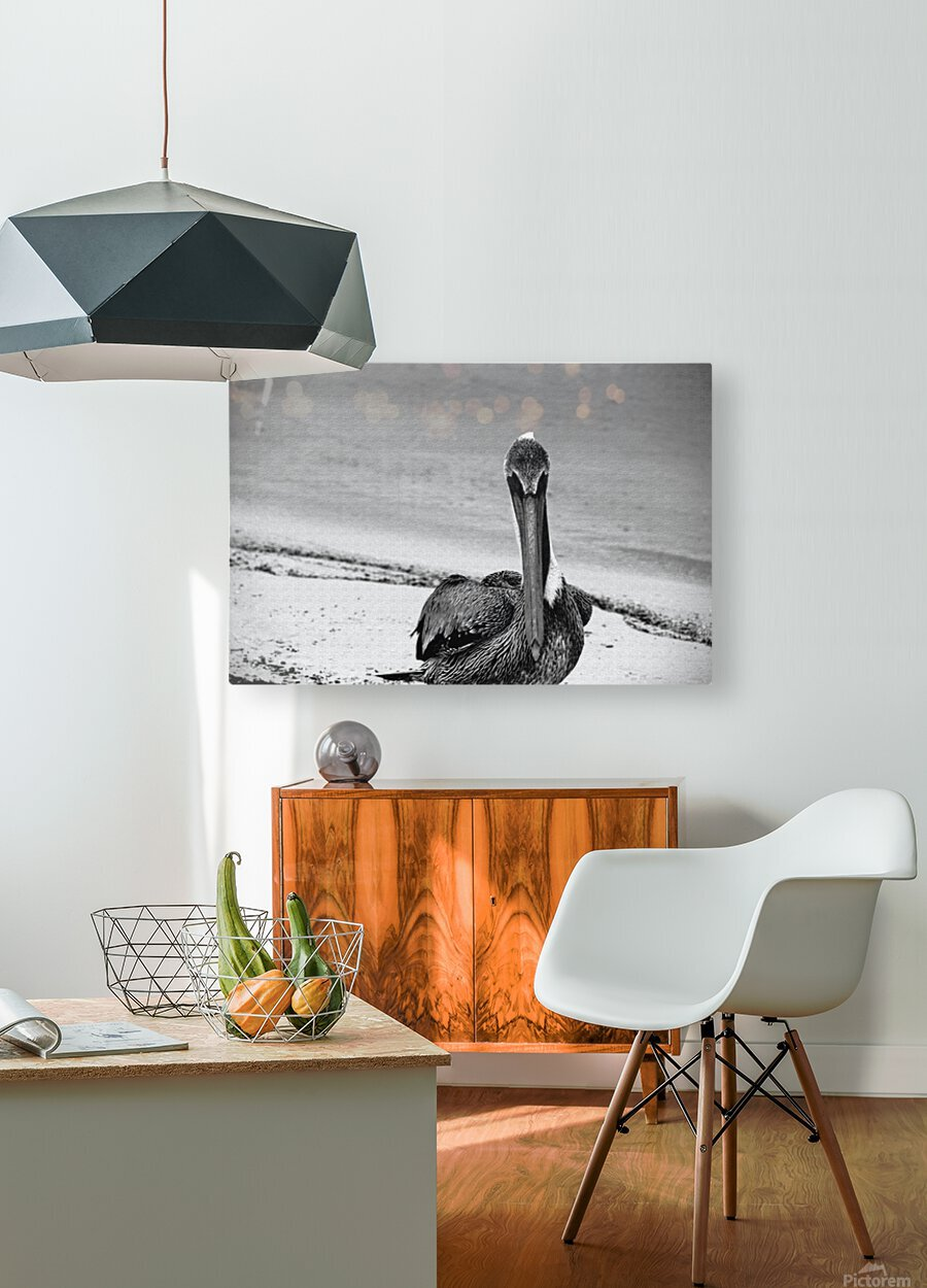 Pelican  HD Metal print with Floating Frame on Back