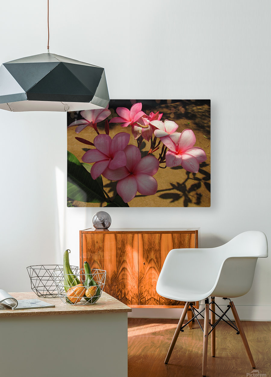 Pink Plumeria 2  HD Metal print with Floating Frame on Back