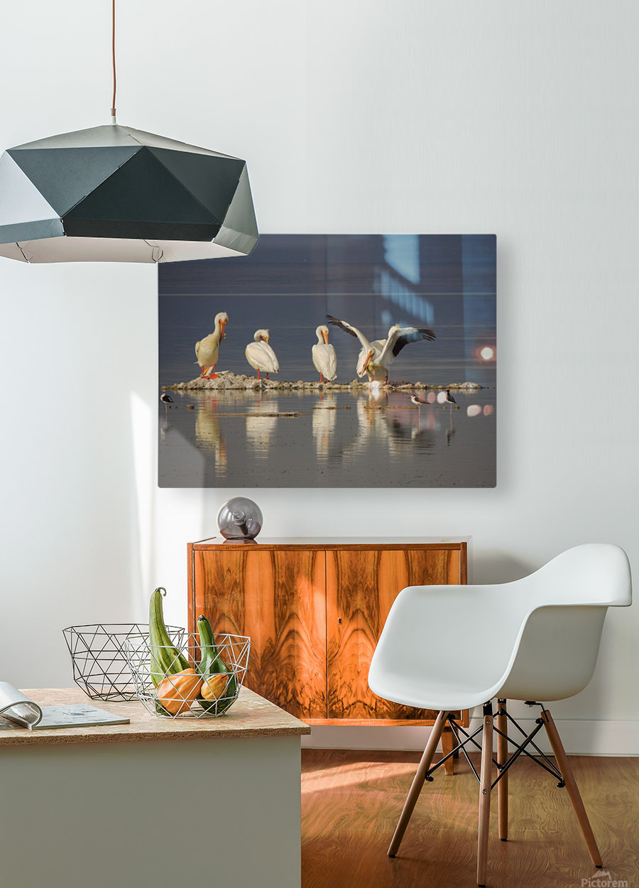 Pelican Reflections 2  HD Metal print with Floating Frame on Back
