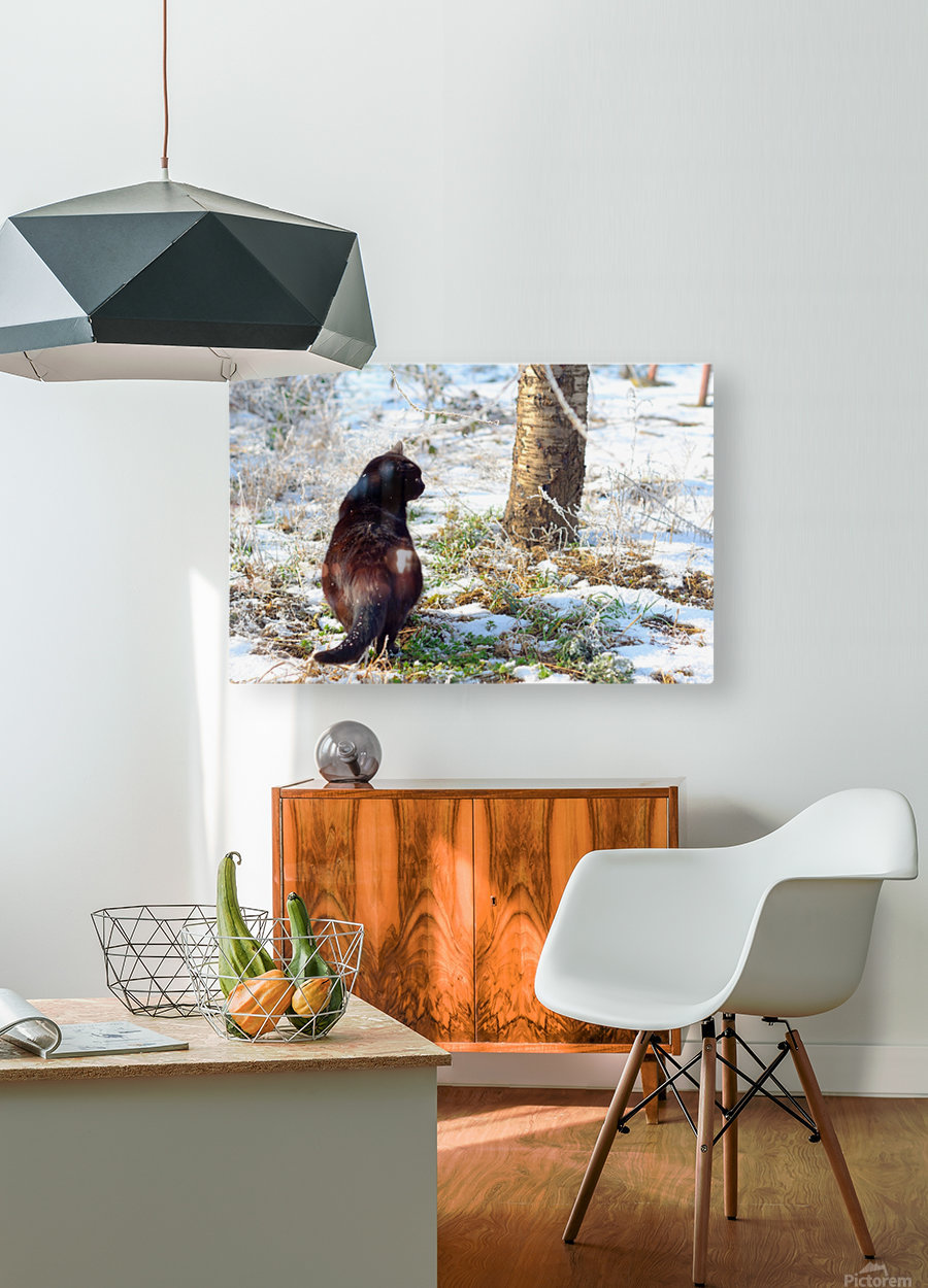 Cat in a sunny frozen garden  HD Metal print with Floating Frame on Back