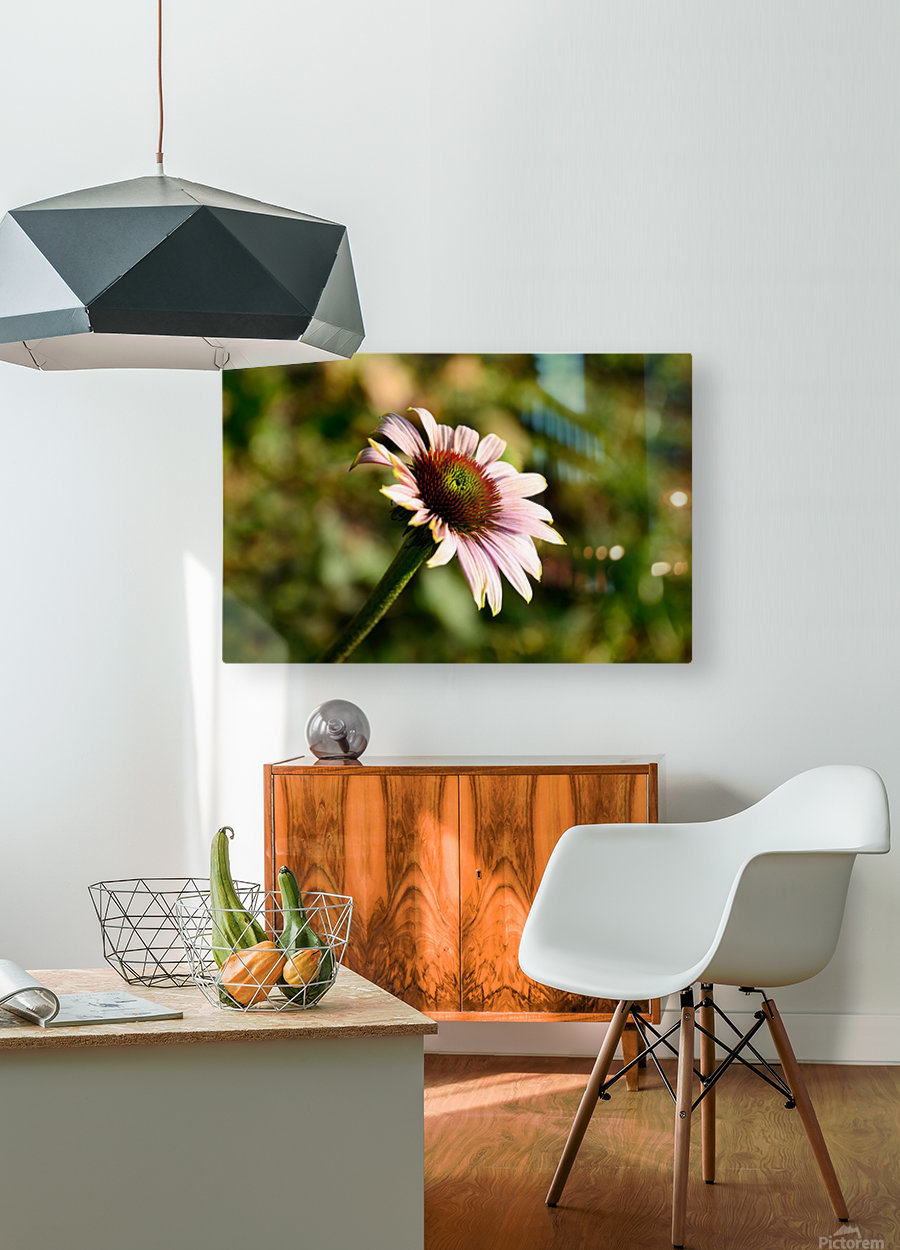 Autumn Echinacea  HD Metal print with Floating Frame on Back