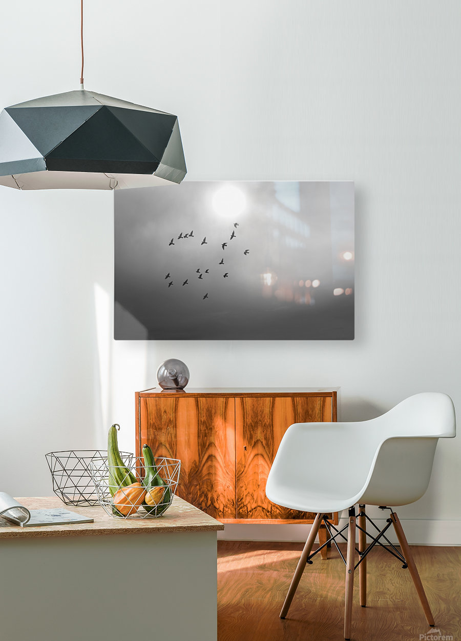 Doves daily flight routine  HD Metal print with Floating Frame on Back