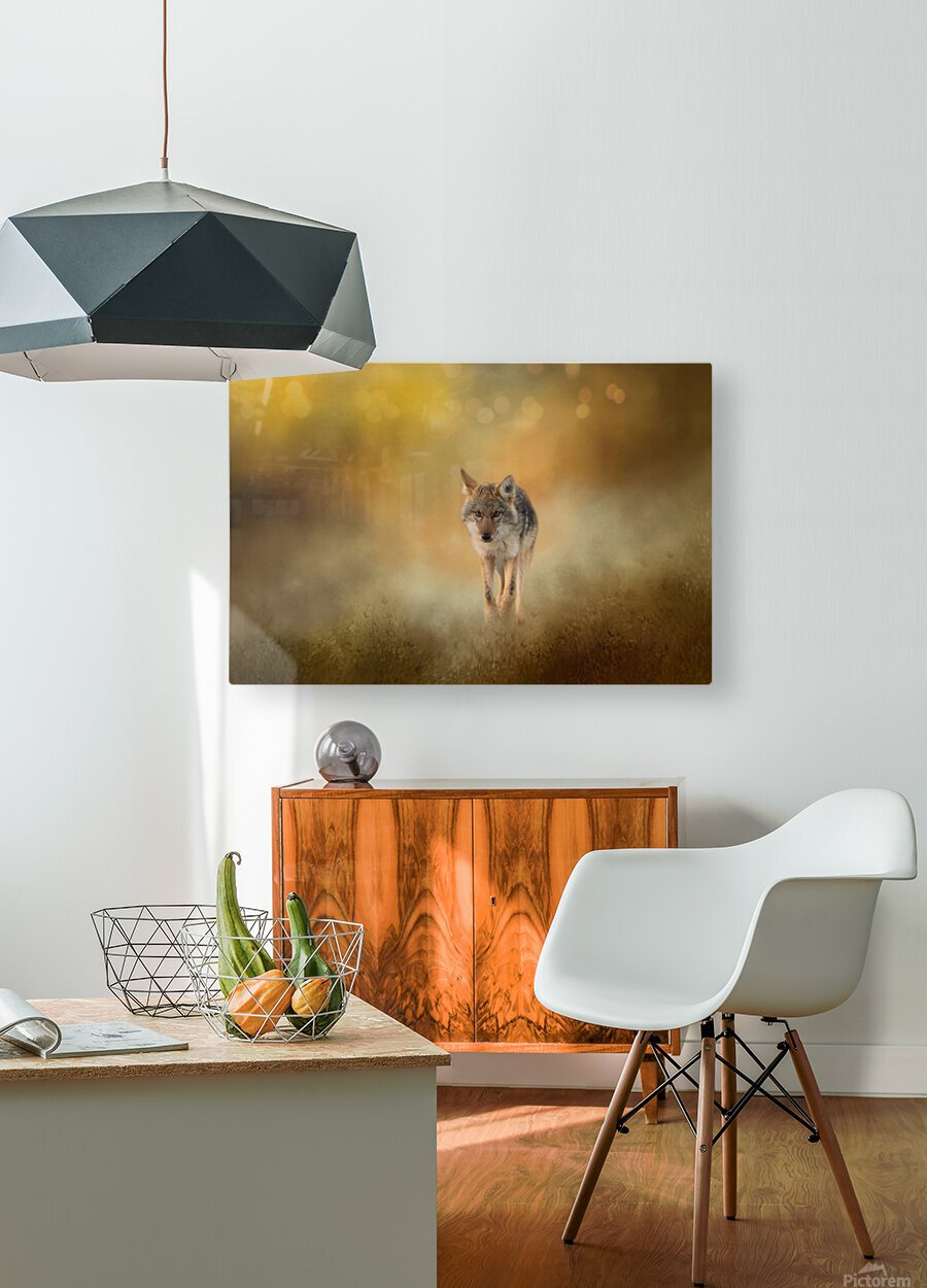 Strolling Coyote  HD Metal print with Floating Frame on Back