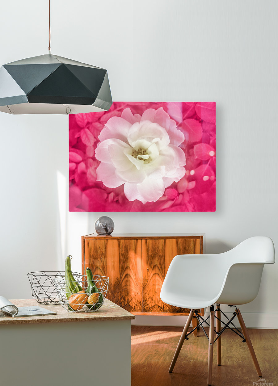 White Rose Top View  HD Metal print with Floating Frame on Back