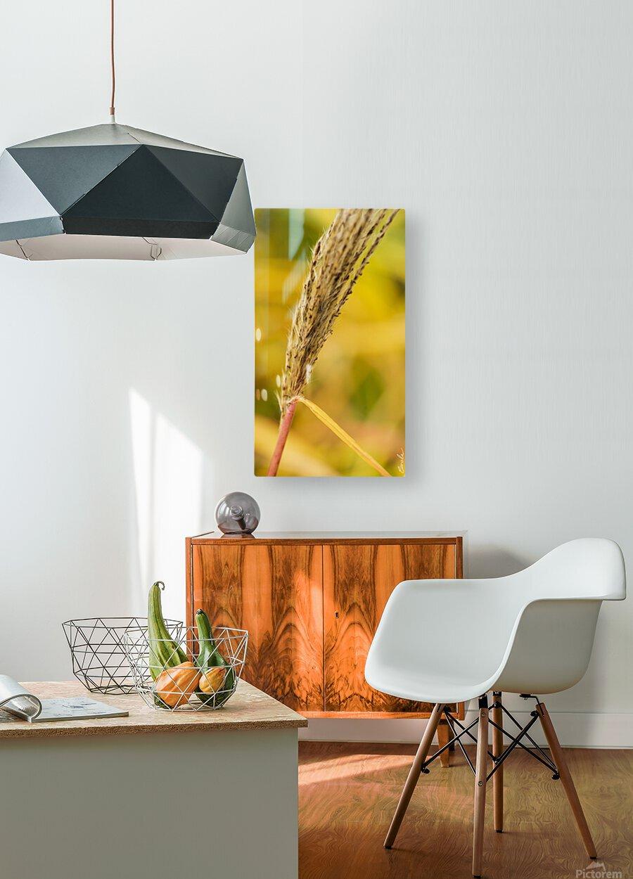Flamboyantes Graminees no. 6 - Flamboyant Grasses no. 6  Impression métal HD avec cadre flottant sur le dos