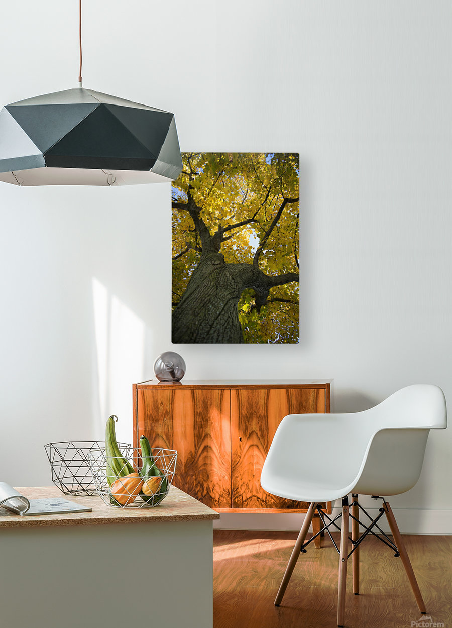 Fall Tree  HD Metal print with Floating Frame on Back