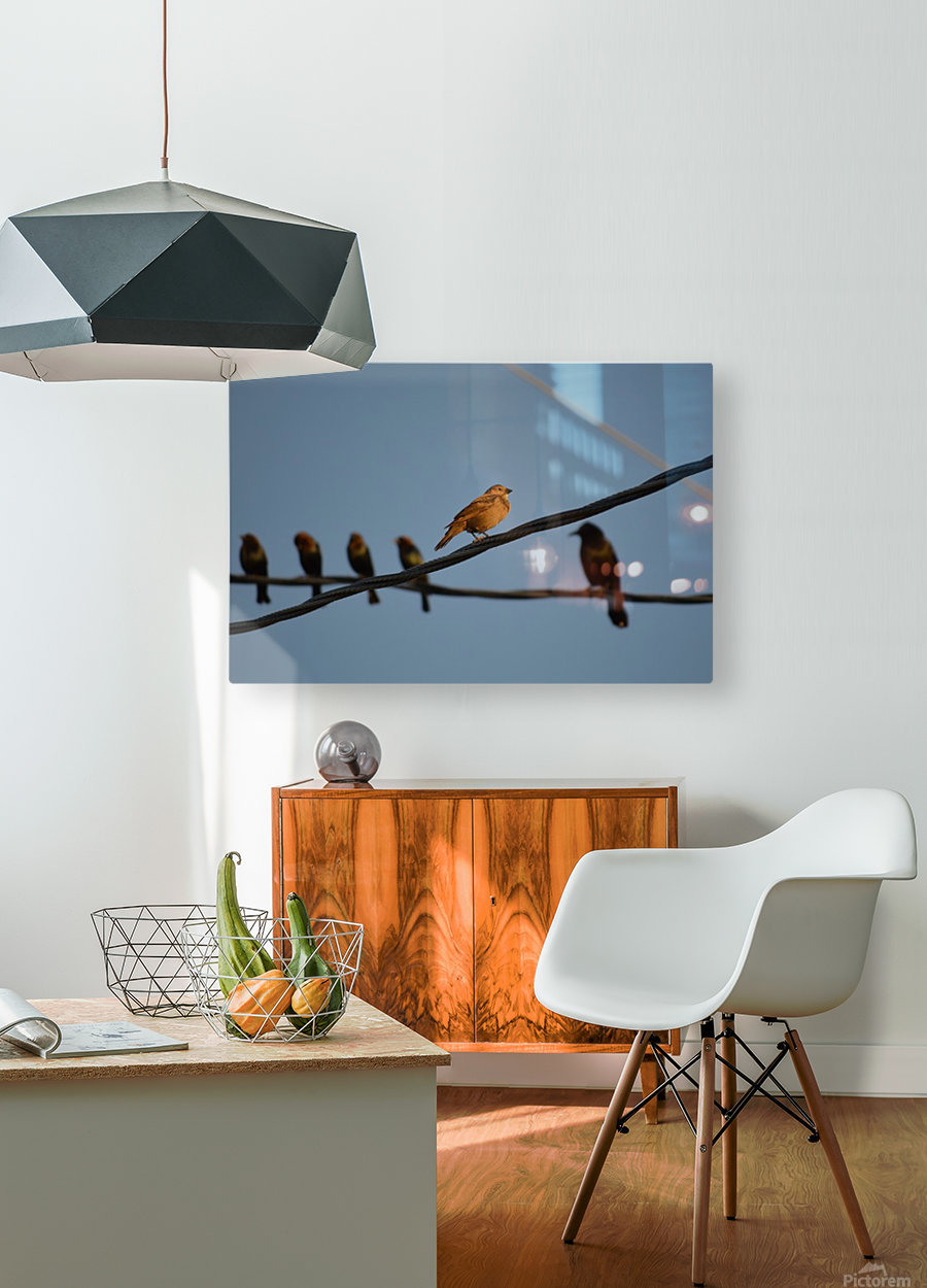 Birds on the Wires  HD Metal print with Floating Frame on Back