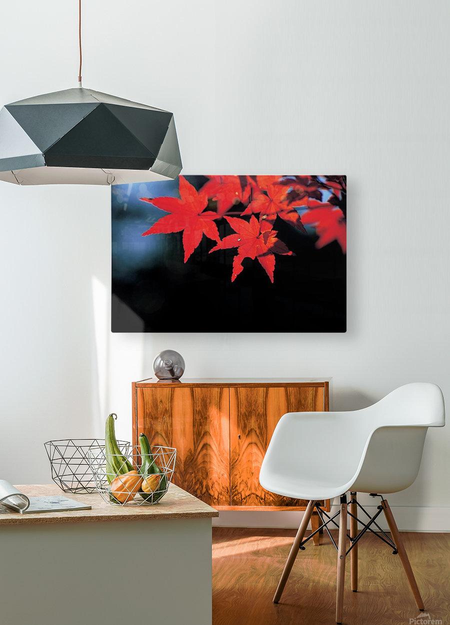 landscape_2_1134  HD Metal print with Floating Frame on Back