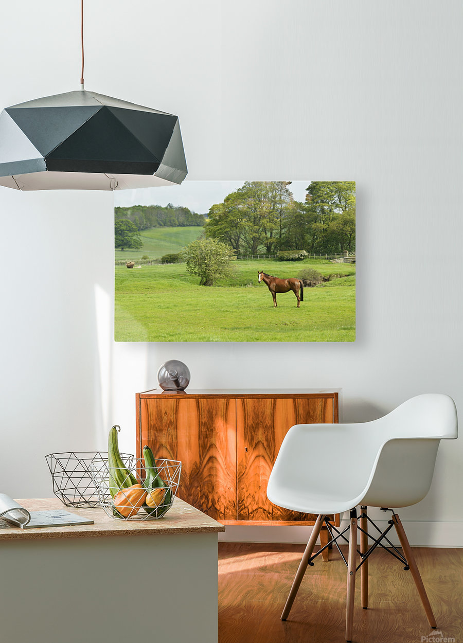 Horse in field; Morpeth, Northumberland, England  HD Metal print with Floating Frame on Back