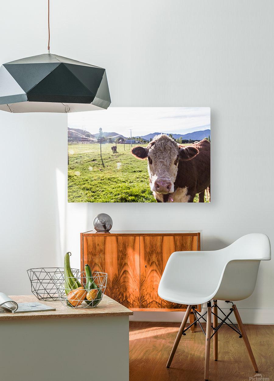 Afternoon Moos  HD Metal print with Floating Frame on Back
