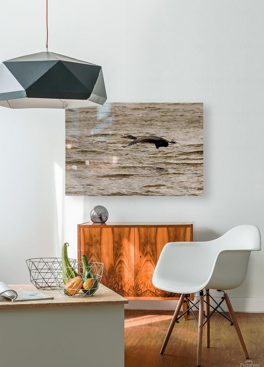Heron flight  HD Metal print with Floating Frame on Back