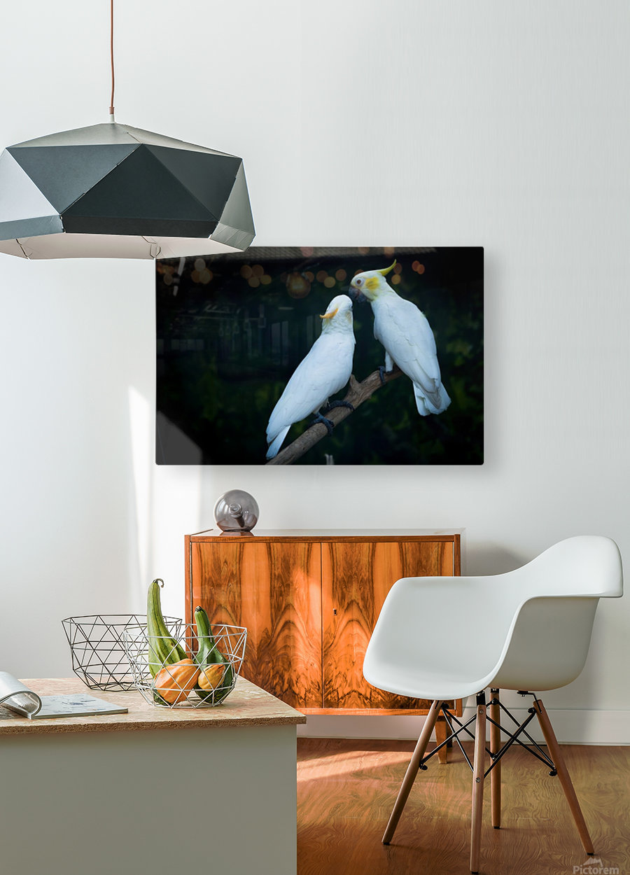 Nature and Birds   15  HD Metal print with Floating Frame on Back