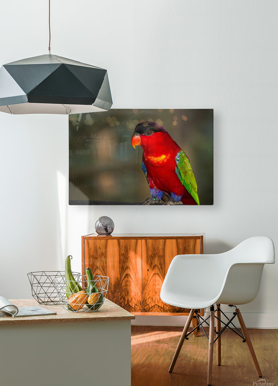Nature and Birds  11  HD Metal print with Floating Frame on Back