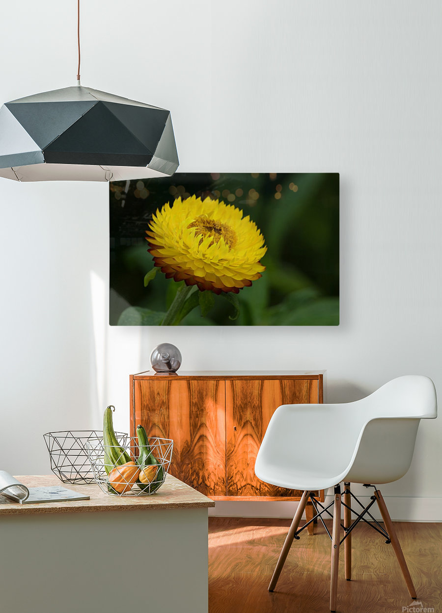 Nature and Flowers 7  HD Metal print with Floating Frame on Back