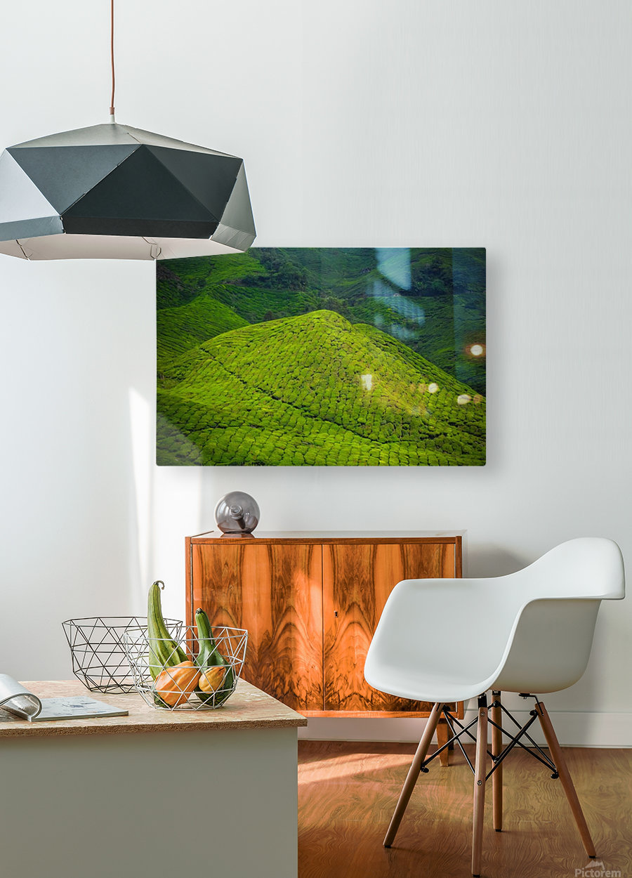 Tea plantations  HD Metal print with Floating Frame on Back