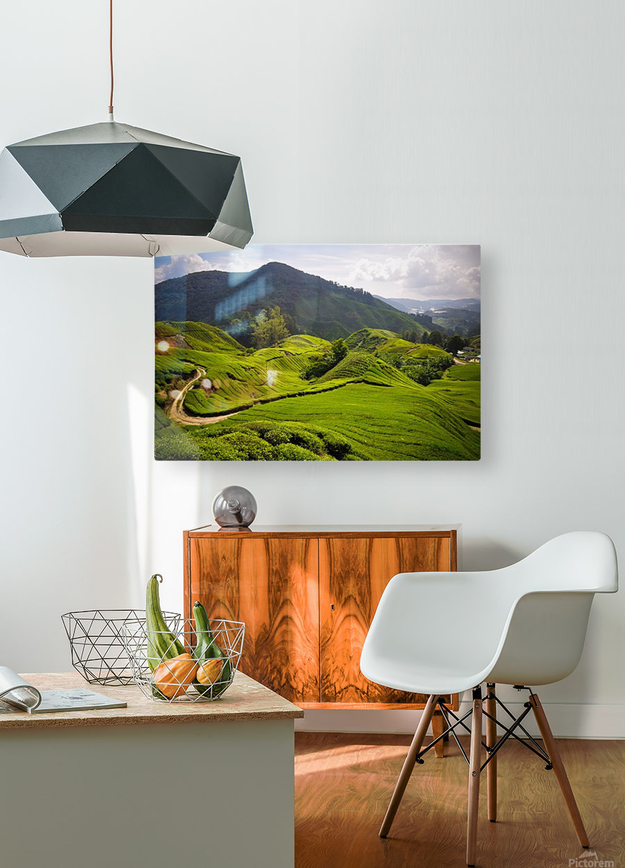 Tea plantations, Malaysia  HD Metal print with Floating Frame on Back