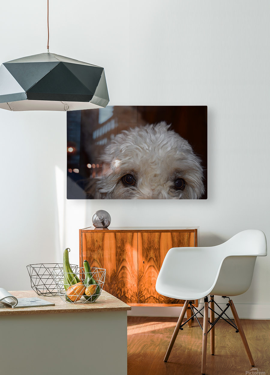 Hungry Eyes   HD Metal print with Floating Frame on Back