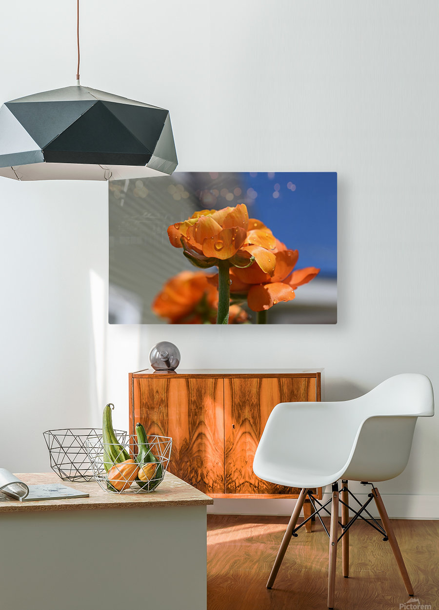 Spring in Bloom  HD Metal print with Floating Frame on Back