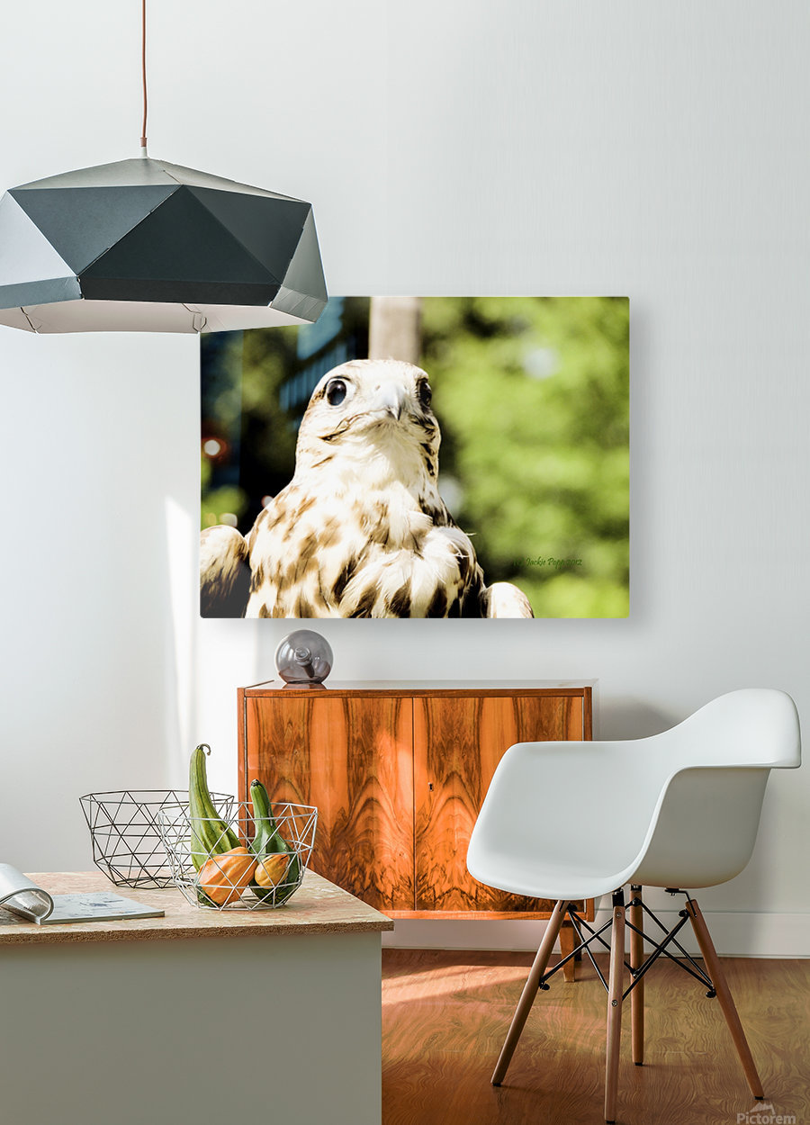 American Krestral  HD Metal print with Floating Frame on Back