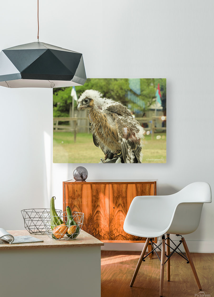 baby hawk1  HD Metal print with Floating Frame on Back