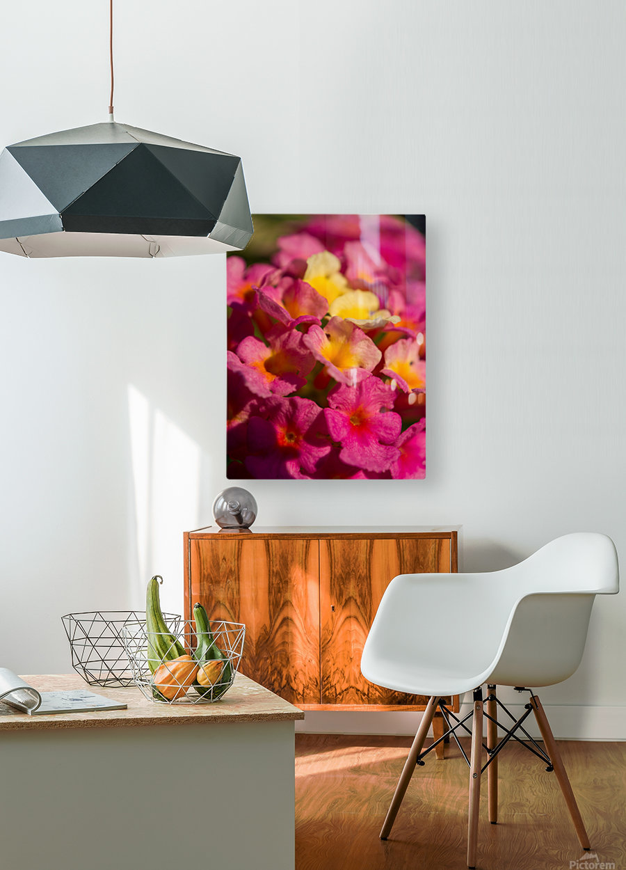 flowers 1  HD Metal print with Floating Frame on Back