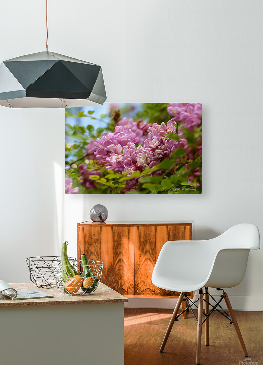 Rose Acacia   HD Metal print with Floating Frame on Back