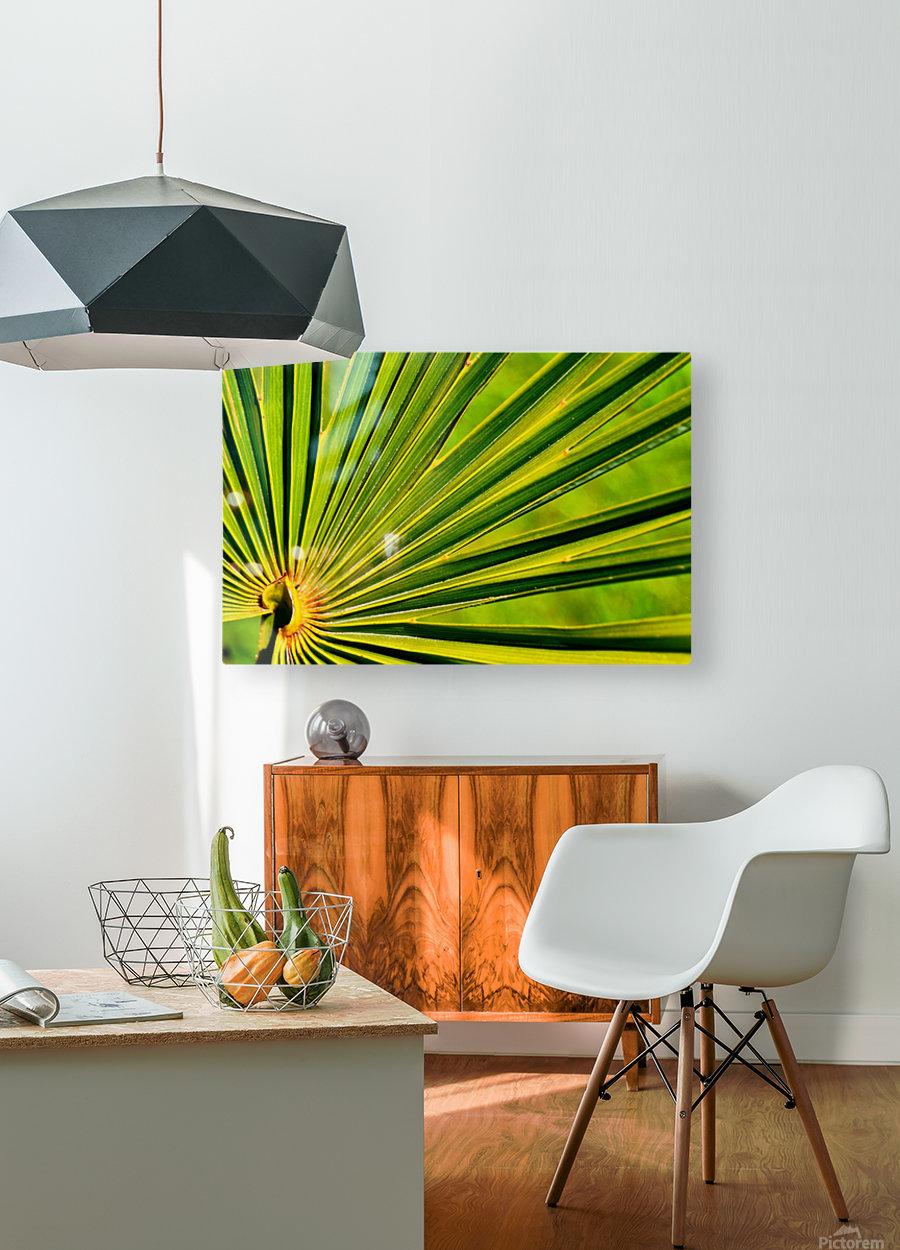 PALM-TREE LEAF 1  HD Metal print with Floating Frame on Back