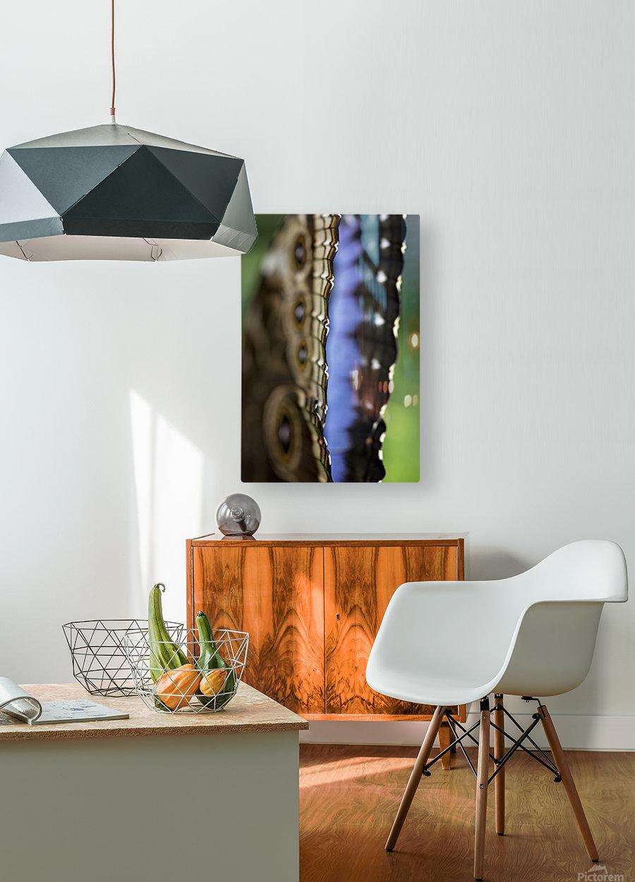 Blue Morpho  HD Metal print with Floating Frame on Back