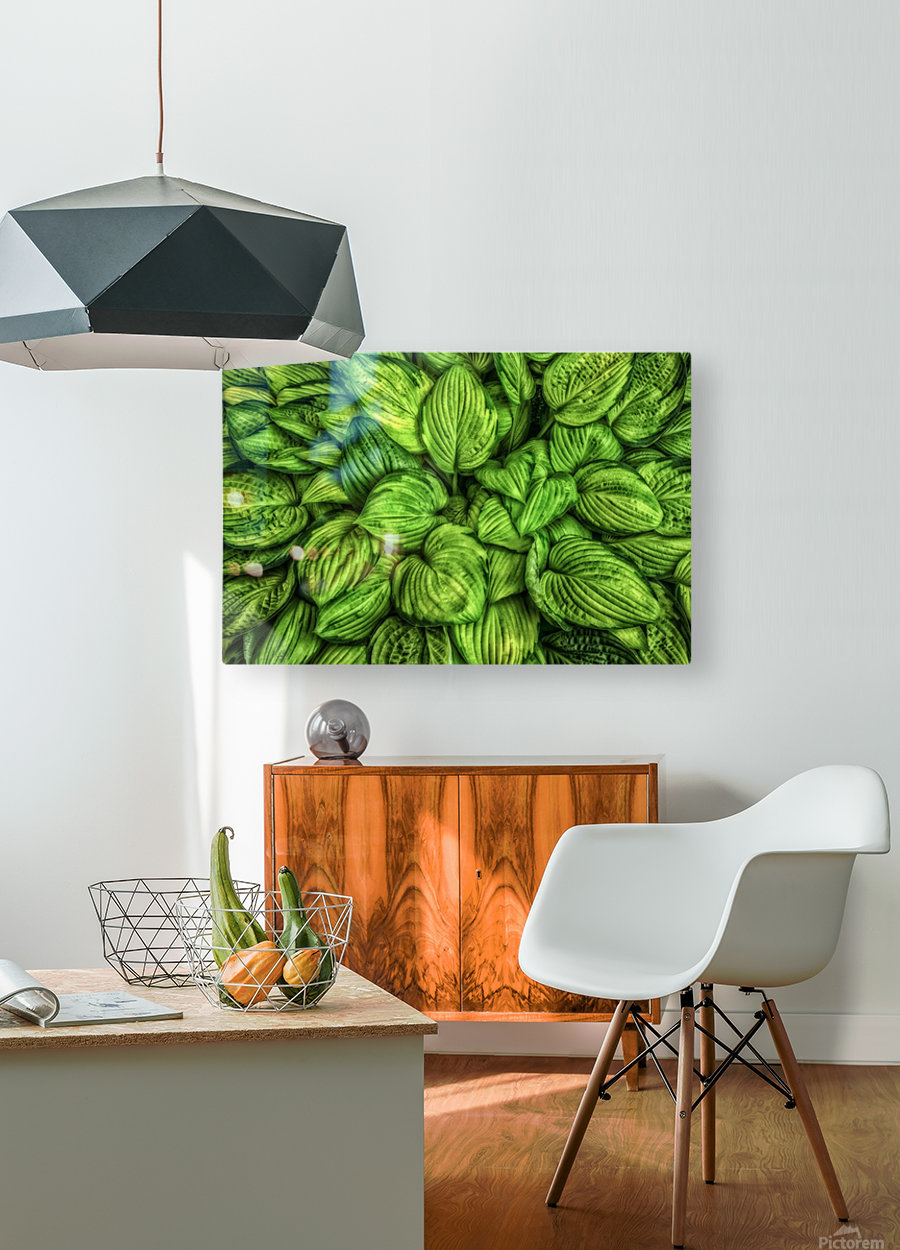 Hosta Glow  HD Metal print with Floating Frame on Back