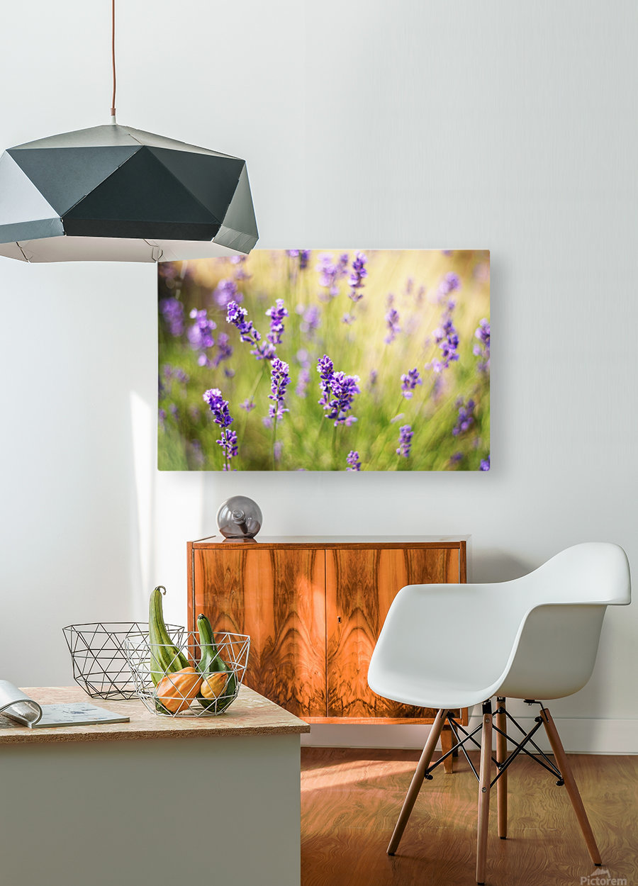 Lavender flowers  HD Metal print with Floating Frame on Back