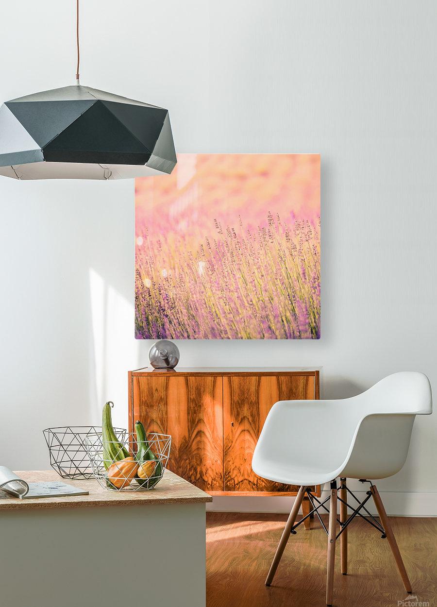 Sunset lavender flowers, instagram effect  HD Metal print with Floating Frame on Back