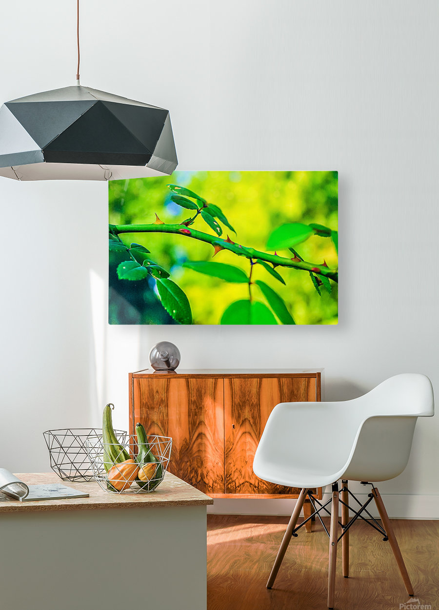 MHPBartlettArboretum 10  HD Metal print with Floating Frame on Back