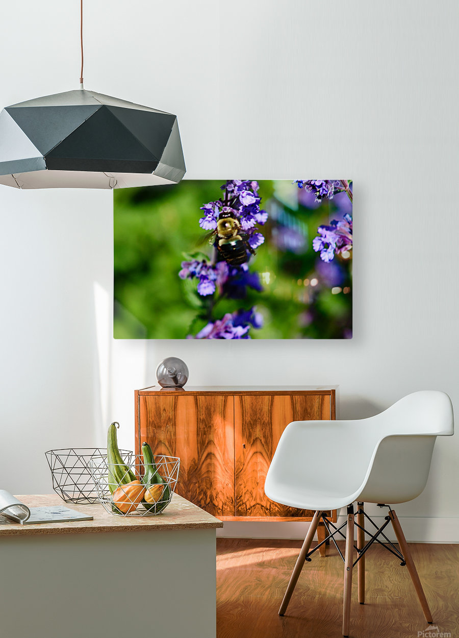 Bumbling Bee 2  HD Metal print with Floating Frame on Back