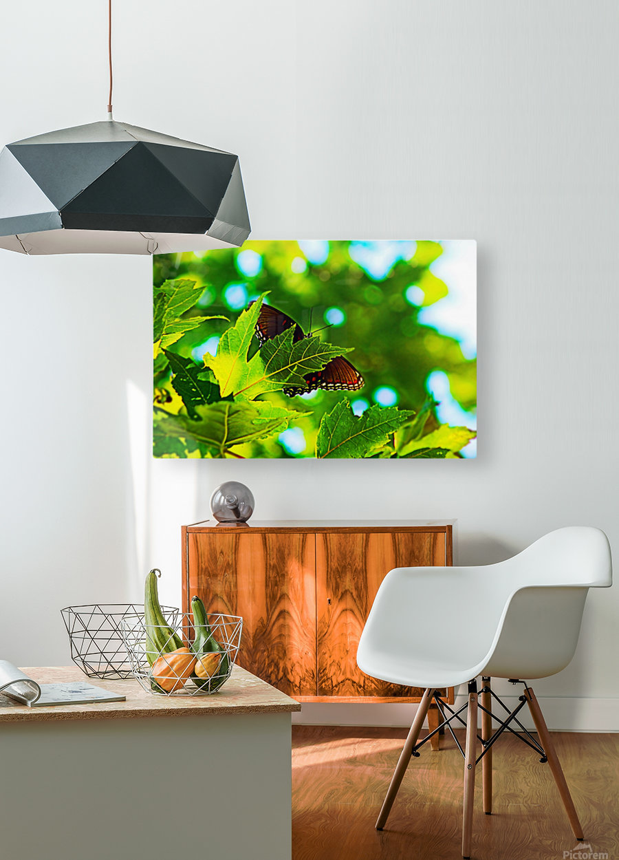 Resting on A Maple Leaf  HD Metal print with Floating Frame on Back