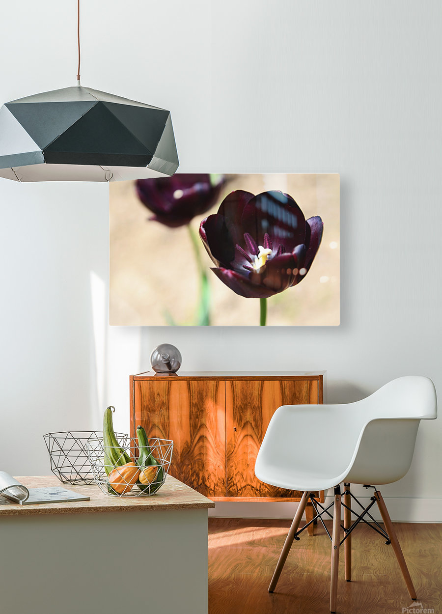 Solar cups  HD Metal print with Floating Frame on Back