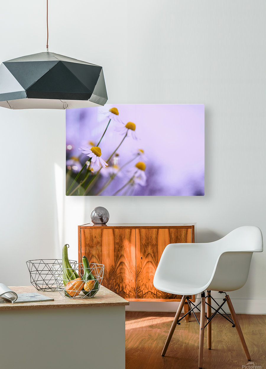 Chamomile in spring  HD Metal print with Floating Frame on Back